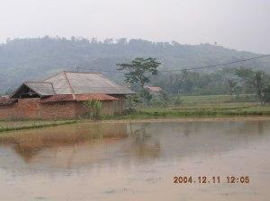 Meskipun kaya bahan tambang, tapi sawah pun tetap tergarap, meski hanya di musim hujan