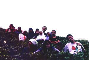 Di antara tanaman teh, Mitra Desa di Cigarehong, beberapa km dari Pondok Cau