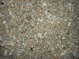 Pasir merica pantai Kuta, kalo menurutku si pasnya pasir ketumbar.. huehehe.
